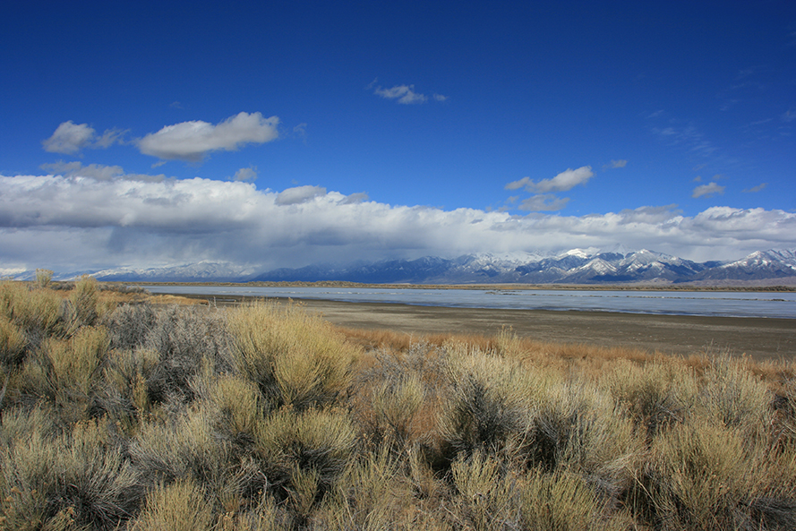Head Lake And Rabbitbrush