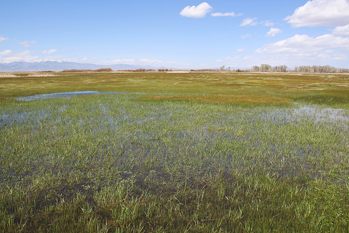 Higel Meadow Spring