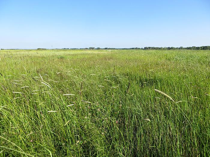 Higel Meadow Summer