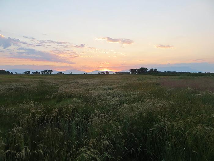 Higel Meadow Sunrise