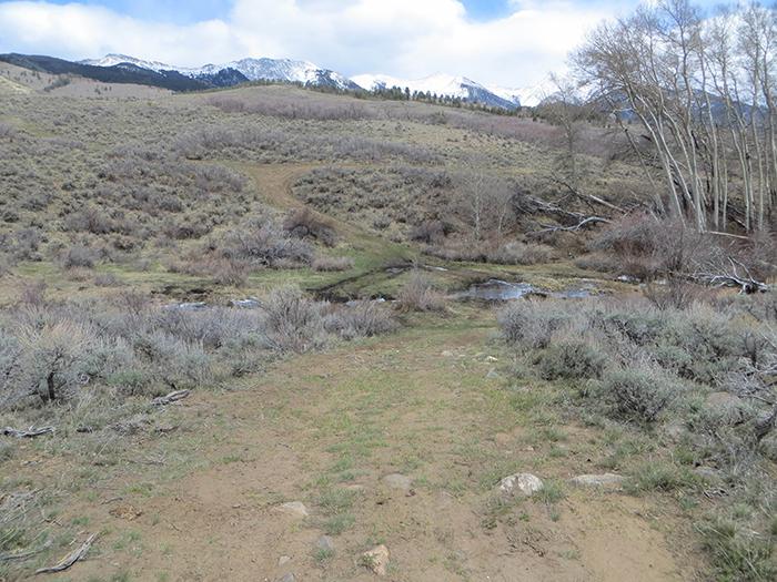 Lonetree Creek Track