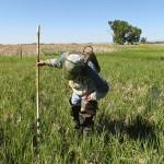 wp-Vegetation-monitoring